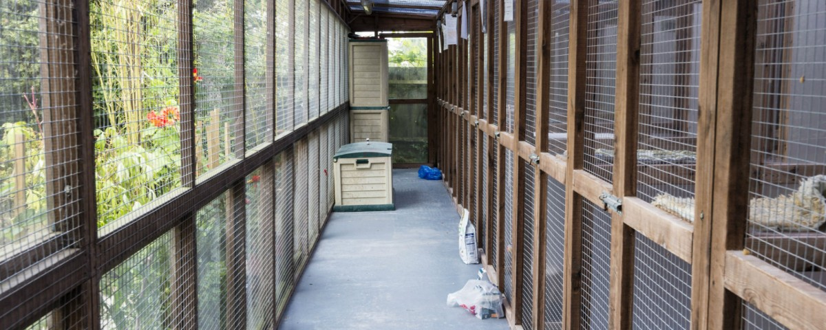 inside the cattery