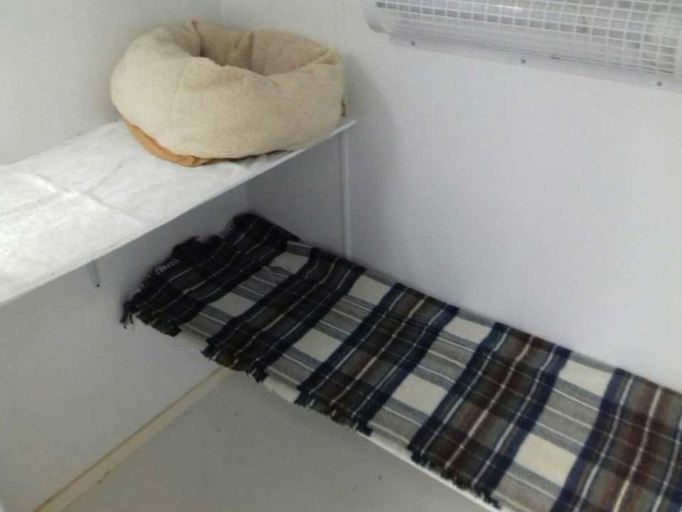 luxury cattery